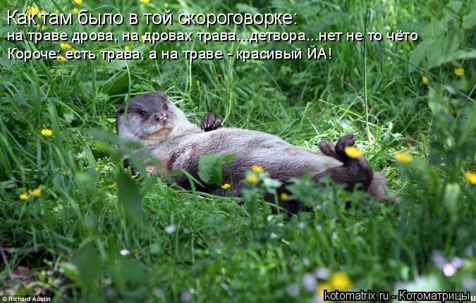 Котоматрица: Как там было в той скороговорке:  на траве дрова, на дровах трава...детвора...нет не то чёто Короче: есть трава, а на траве - красивый ЙА!