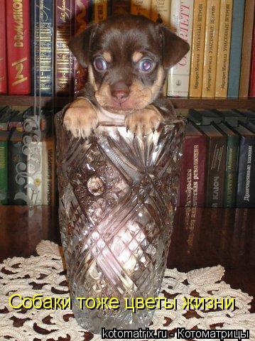 Котоматрица: Собаки тоже цветы жизни