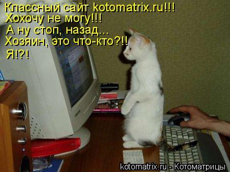 Котоматрица: Классный сайт kotomatrix.ru!!!  Хохочу не могу!!! А ну стоп, назад...  Хозяин, это что-кто?!!  Я!?!
