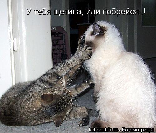 Котоматрица: У тебя щетина, иди побрейся..!