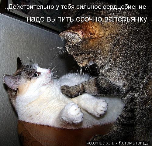 Котоматрица: ...Действительно у тебя сильное сердцебиение надо выпить срочно валерьянку!