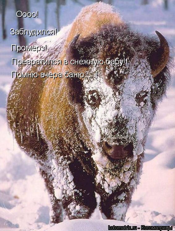 Котоматрица: Оооо! Заблудился! Промерз! Превратился в снежную бабу!! Помню вчера баню.....!