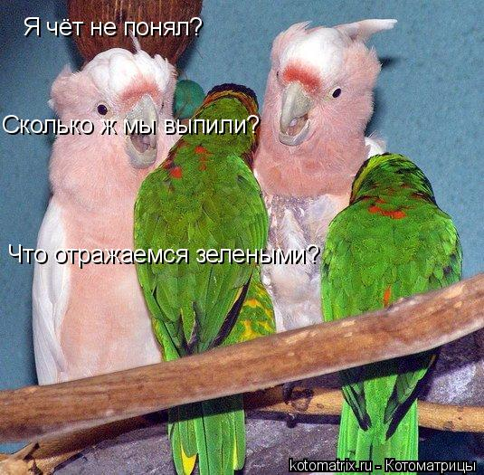 Котоматрица: Я чёт не понял? Сколько ж мы выпили? Что отражаемся зелеными?