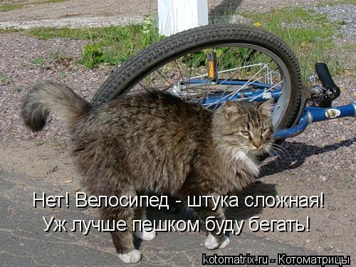 Котоматрица: Уж лучше пешком буду бегать! Нет! Велосипед - штука сложная!