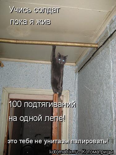 Котоматрица: Учись солдат пока я жив 100 подтягиваний  на одной лепе! это тебе не унитазы палировать!