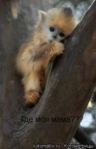 Котоматрица: Где моя мама???