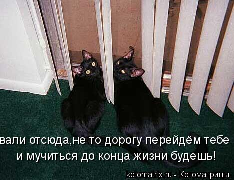Котоматрица: вали отсюда,не то дорогу перейдём тебе и мучиться до конца жизни будешь!