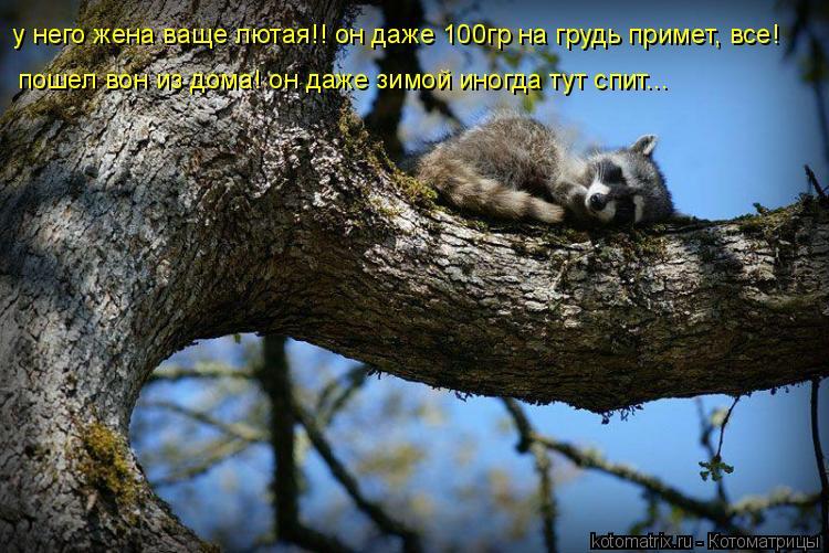 Котоматрица: у него жена ваще лютая!! он даже 100гр на грудь примет, все! пошел вон из дома! он даже зимой иногда тут спит...