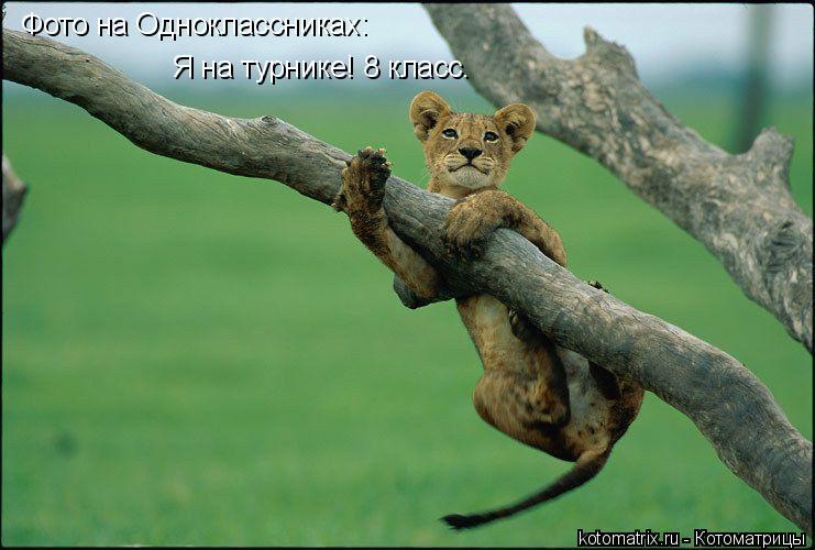 Котоматрица: Фото на Одноклассниках: Я на турнике! 8 класс.