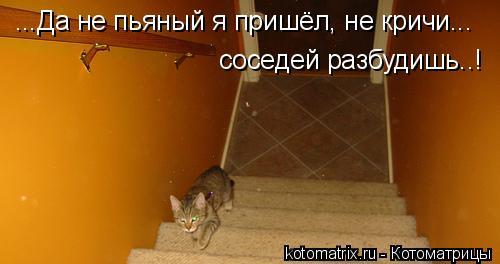Котоматрица: ...Да не пьяный я пришёл, не кричи... соседей разбудишь..!