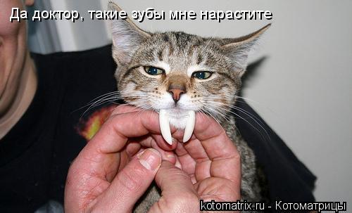 Котоматрица: Да доктор, такие зубы мне нарастите