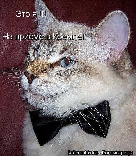 Котоматрица: Это я !!! На приёме в Кремле!