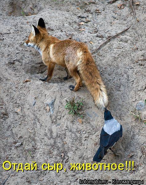 Котоматрица: Отдай сыр, животное!!!