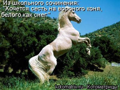 """Котоматрица: Из школьного сочинения: """"Хочется сесть на вороного коня, белого,как снег."""""""