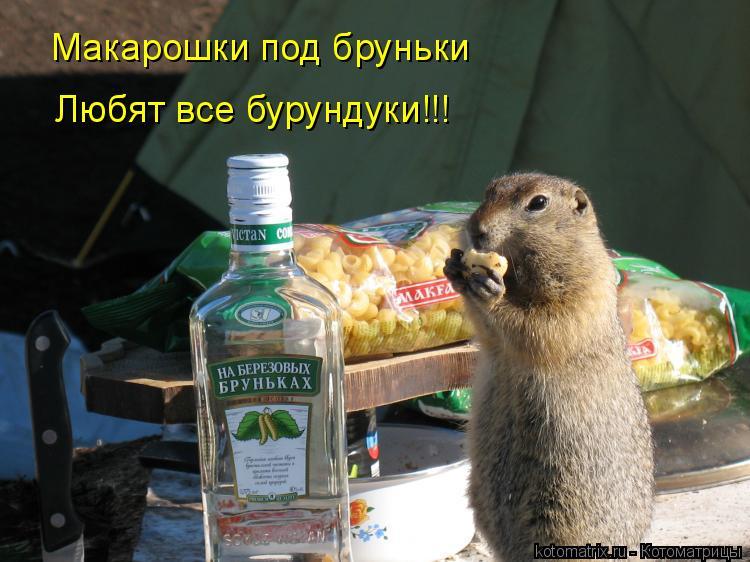 Котоматрица: Макарошки под бруньки Любят все бурундуки!!!