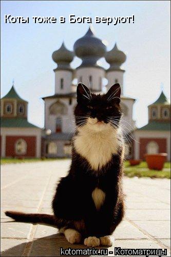Котоматрица: Коты тоже в Бога веруют!