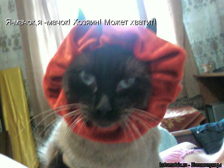 Котоматрица: Я-мачок,я -мачок! Хозяин! Может хватит!