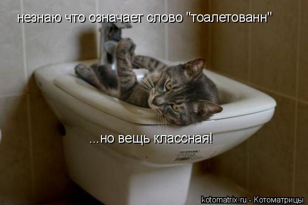 """Котоматрица: незнаю что означает слово """"тоалетованн"""" ...но вещь классная!"""
