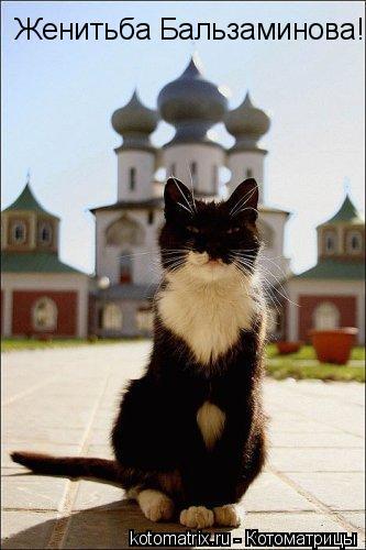 Котоматрица: Женитьба Бальзаминова!
