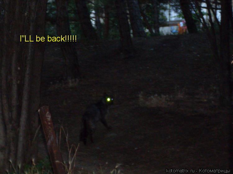 """Котоматрица: I""""LL be back!!!!!"""