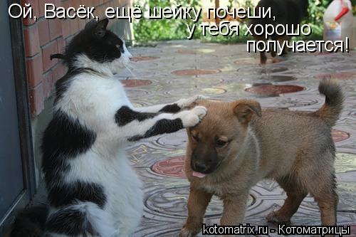 Котоматрица: Ой, Васёк, ещё шейку почеши, у тебя хорошо  получается!