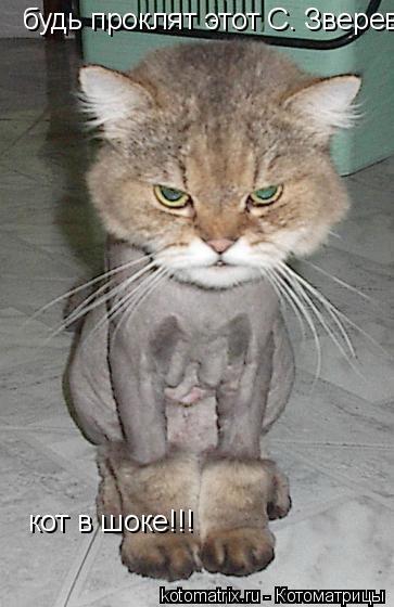 Котоматрица: будь проклят этот С. Зверев! кот в шоке!!!