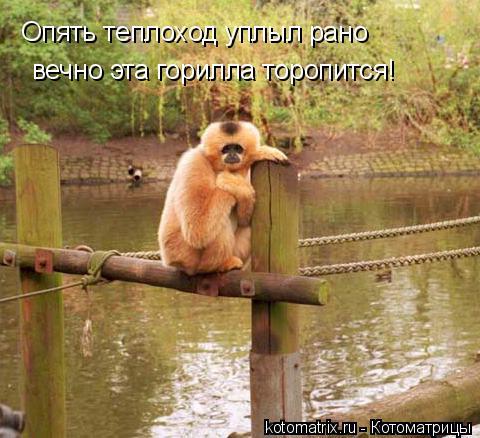 Котоматрица: Опять теплоход уплыл рано вечно эта горилла торопится!