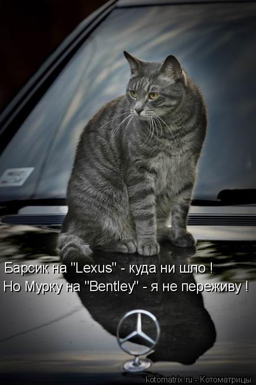 """Котоматрица: Барсик на """"Lexus"""" - куда ни шло ! Но Мурку на """"Bentley"""" - я не переживу !"""