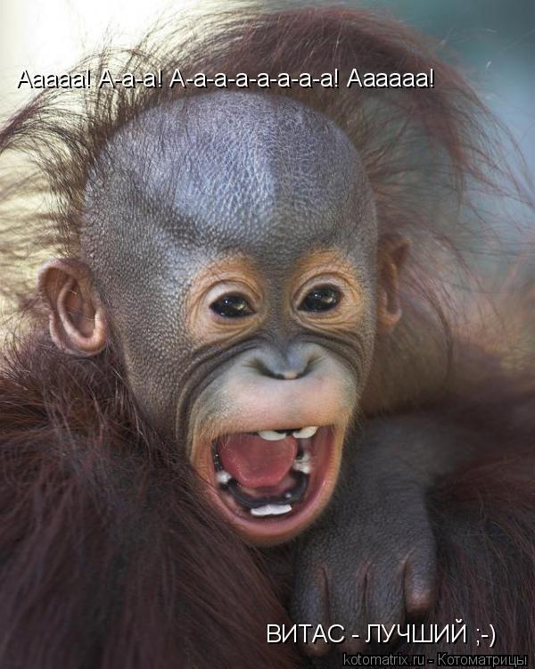 Котоматрица: Ааааа! А-а-а! А-а-а-а-а-а-а-а! Аааааа! ВИТАС - ЛУЧШИЙ ;-)