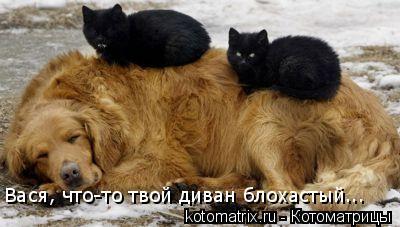 Котоматрица: Вася, что-то твой диван блохастый...