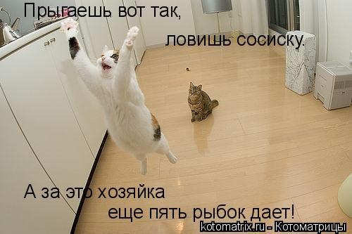 Котоматрица: Прыгаешь вот так, ловишь сосиску. А за это хозяйка еще пять рыбок дает!