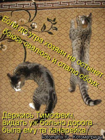 Котоматрица: видать уж больно дорога Держись Тимофеич, была ему та канарейка... Если до утра хозяин не остынет -  боюсь свалюсь и спалю обоих...