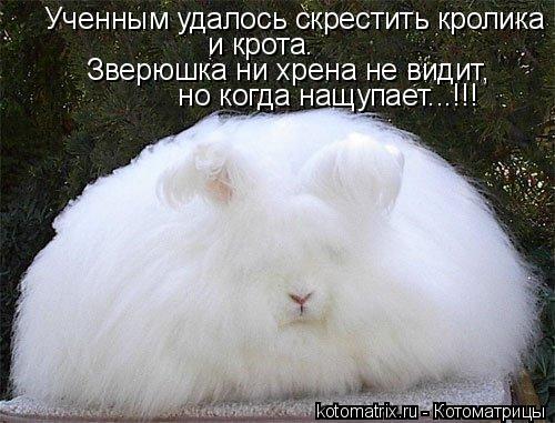 Котоматрица: Ученным удалось скрестить кролика и крота. Зверюшка ни хрена не видит,  но когда нащупает...!!!