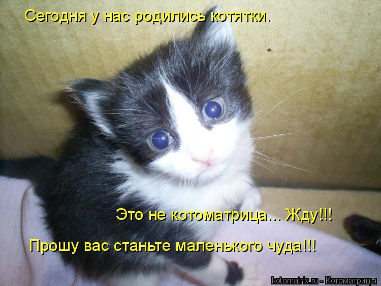 Котоматрица: Сегодня у нас родились котятки. Прошу вас станьте маленького чуда!!! Это не котоматрица... Жду!!!