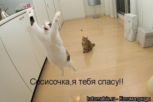 Котоматрица: Сосисочка,я тебя спасу!!