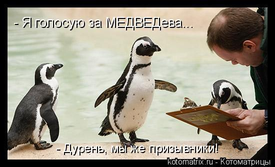 Котоматрица: - Я голосую за МЕДВЕДева... - Дурень, мы же призывники!