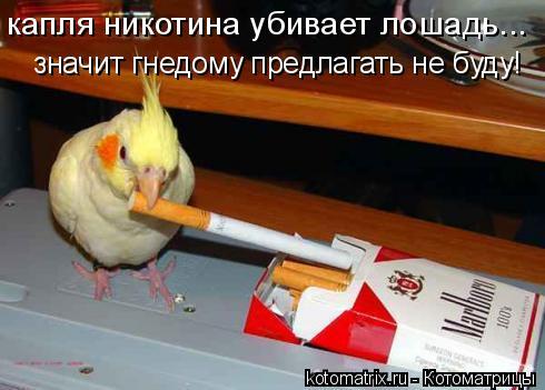 Котоматрица: капля никотина убивает лошадь... значит гнедому предлагать не буду!