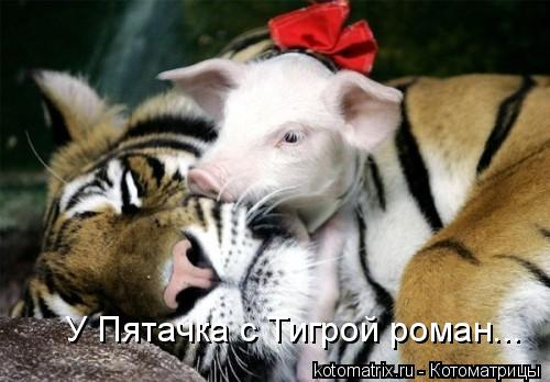 Котоматрица: У Пятачка с Тигрой роман...