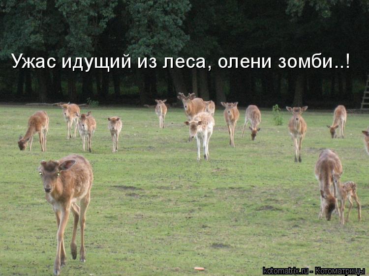 Котоматрица: Ужас идущий из леса, олени зомби..!