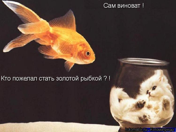 Котоматрица: Сам виноват ! Кто пожелал стать золотой рыбкой ? !