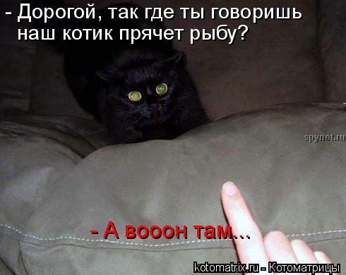 Котоматрица: - Дорогой, так где ты говоришь  наш котик прячет рыбу? - А вооон там...