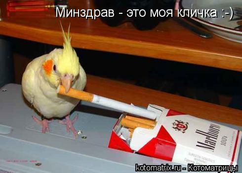 Котоматрица: Минздрав - это моя кличка :-)