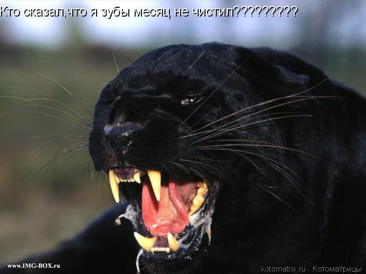 Котоматрица: Кто сказал,что я зубы месяц не чистил?????????