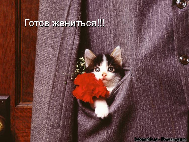 Котоматрица: Готов жениться!!!