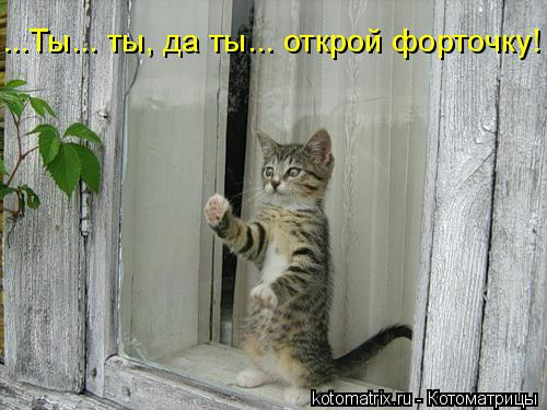 Котоматрица: ...Ты... ты, да ты... открой форточку!