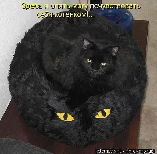 Котоматрица: Здесь я опять могу почувствовать себя котенком!...