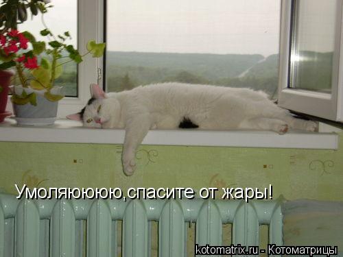Котоматрица: Умоляюююю,спасите от жары!