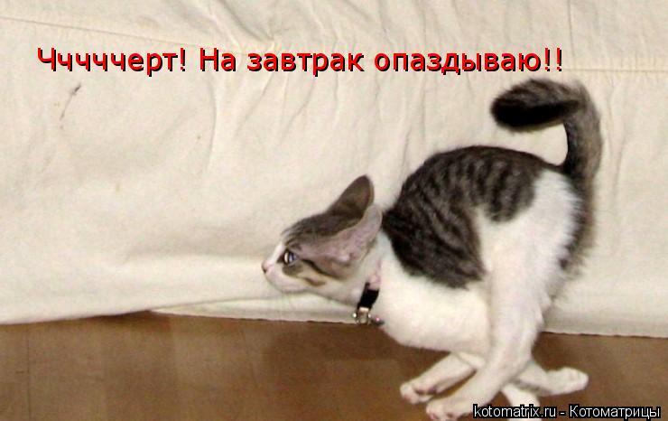 Котоматрица: Чччччерт! На завтрак опаздываю!!
