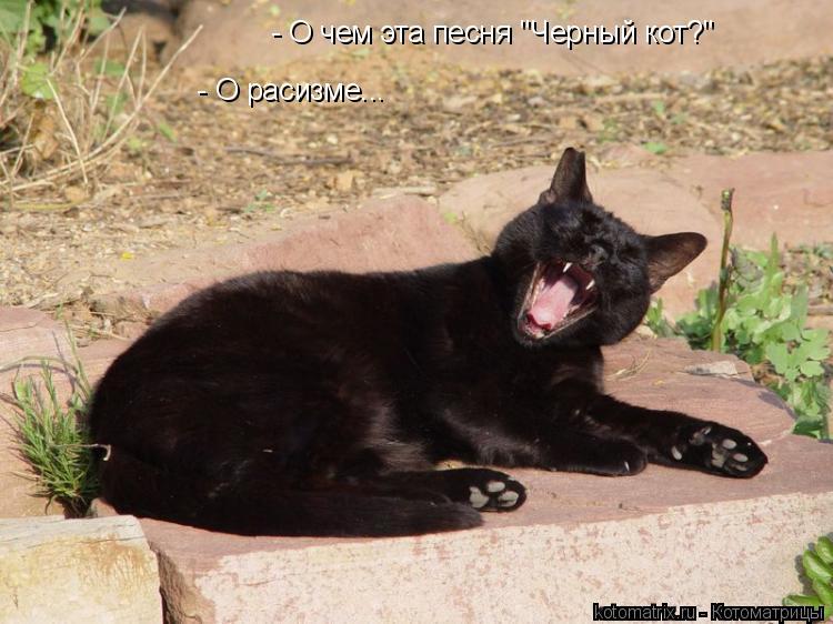 """Котоматрица: - О чем эта песня """"Черный кот?""""   - О расизме..."""