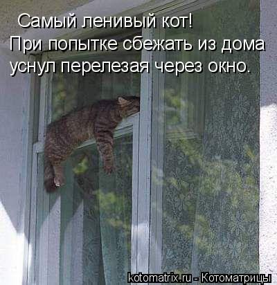 Котоматрица: Самый ленивый кот! При попытке сбежать из дома уснул перелезая через окно.